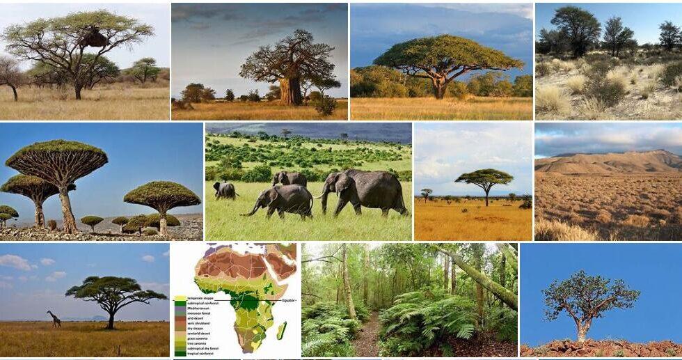 Africa vegetation